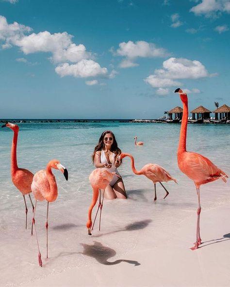 Renaissance Island - Flamingo Beach in Aruba Vacation Places, Dream Vacations, Dream Vacation Spots, Shotting Photo, Photos Voyages, Beautiful Places To Travel, Parcs, Travel Aesthetic, Aesthetic Design