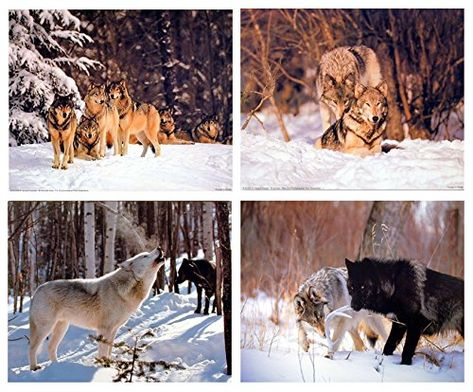 Two Wolf Native American Northwest Wild Animal Wall Decor Art Print Poster 22x28