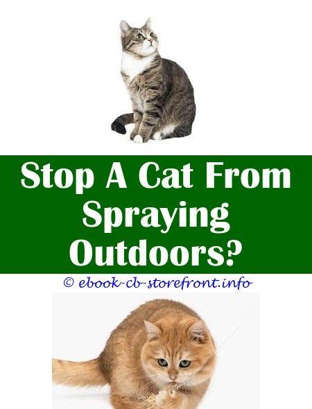 Portentous Cool Tips Cat Deterrent Spray Motion Sensor Does