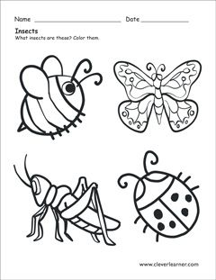 Insect Coloring Sheet Insects Preschool Minimalist Homeschool Insects