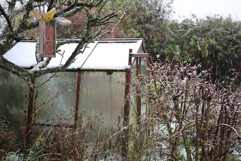 Top 10 Tips For Heating A Greenhouse In Winter Thompson Morgan