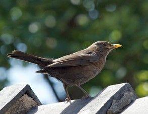 Kleine Vogelkunde Heimische Wintervogel Erkennen Vogelkunde