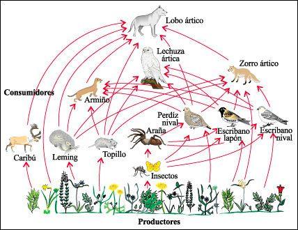 Red Trofica Ecosistemas Red Trofica Ciencia Preescolar