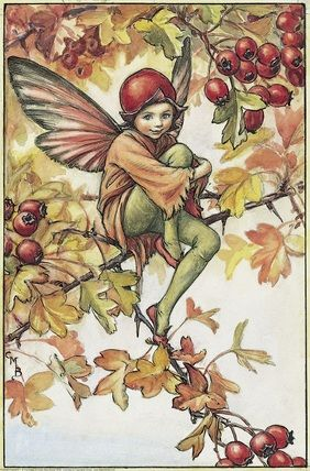 Illustration for the Hawthorn Fairy from Flower Fairies of the Autumn. A boy fairy sits on the brach of a hawthorn tree with one arm around his raised right knee.    Author / Illustrator  Cicely Mary Barker