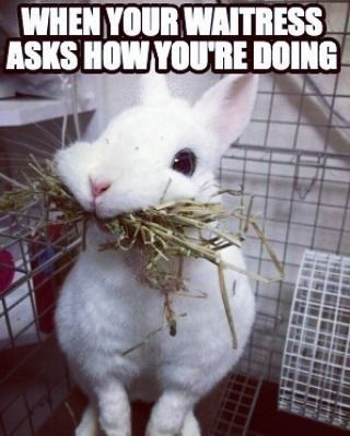 15 Hilarious Bunny Memes Will Have You Laughing All Day Long Best Funny Pictures Animal Memes Clean Cute Animal Memes