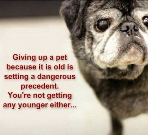 """Giving Up A Pet Because He Is Old Is Setting A Dangerous Precedent. You're Not Getting Any Younger Either ...Giving Them A Forever Home Means """"FOREVER""""!"""