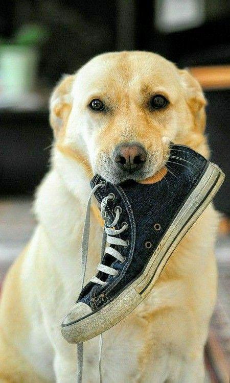 converse pour chien