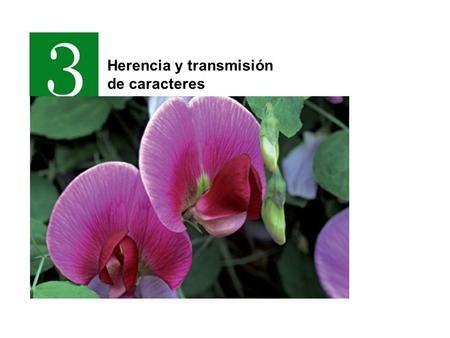 Herencia Y Transmisión De Caracteres Clase De Biología Cariotipo Biología