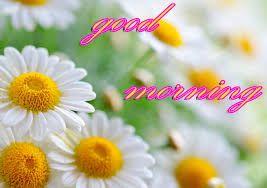 Beautiful Gud Morning Pics Hd Download Good Morning Images Good Morning Wallpaper Good Morning Images Download