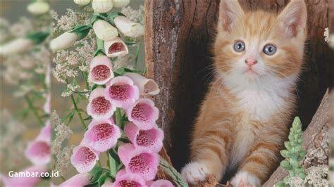Pin On Wallpaper Cat laptop wallpaper images