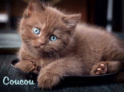 Cartes virtuelles coucou bonne journee - Joliecarte | Image coucou, Chats  et chatons, Cute kittens