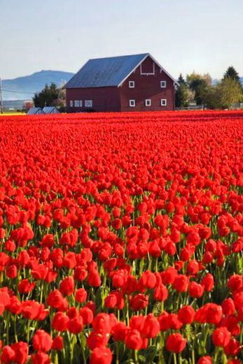 173 Best The Red Color Images In 2019 Red Red Color Color In 2020 Red Colour Images Colour Images Beautiful Nature