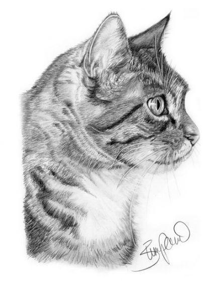 Neu Wie Man Ein Katzenprofil Zeichnet 41 Ideen Aquarell Katze Katzenzeichnung Tiere Zeichnen