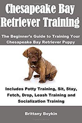 Chesapeake Bay Retriever Training The Beginner S Guide To