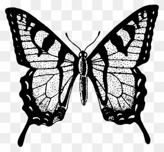 Single Flying Butterfly Clip Art Black Black And White Butterfly Png Transparent Png Butterfly Clip Art Silhouette Online Store Silhouette Design