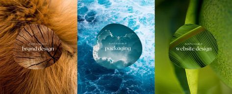 Little Fox Design - Green Graphic Design & Sustainable Packaging