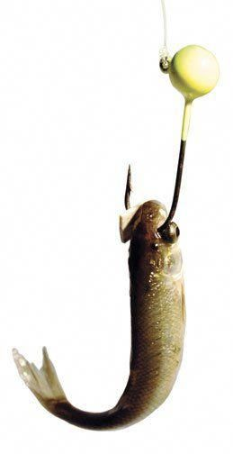 Tired Of Having Minnows Mysteriously Fly Off Your Hook When Casting Fish Fishing Tips Freshwater Fishing