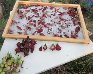 How To Harvest And Dry Hibiscus For Tea Hibiscus Hibiscus Tea Dried Hibiscus Flowers Hibiscus