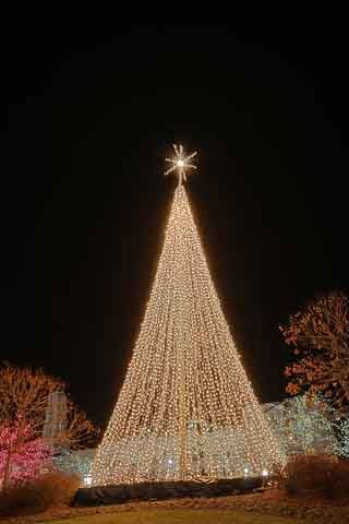 Outdoor Xmas Tree Lights How to make a mega tree with christmas lights cool things how to make a mega tree with christmas lights cool things pinterest christmas lights lights and holidays workwithnaturefo