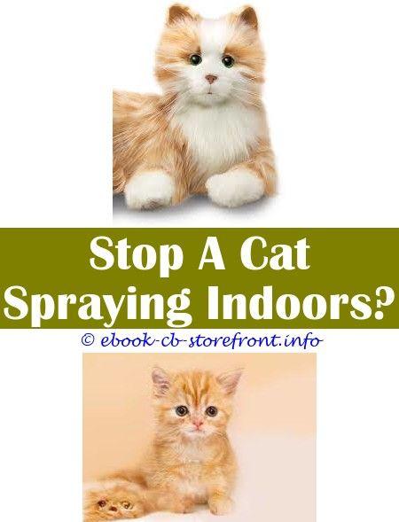 Video Of Virile Kitty Spraying