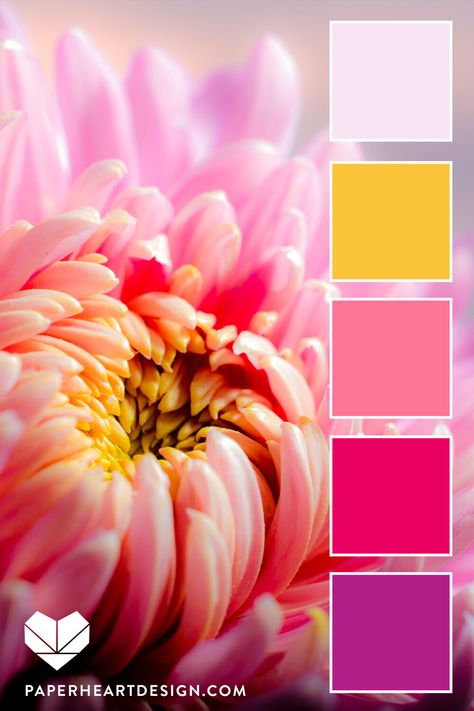 Color Palette: You Can Learn a Lot of Things From the Flowers — Paper Heart Design Color Schemes Colour Palettes, Colour Pallette, Color Combos, Pink Palette, Seeds Color Palettes, Design Seeds, Interior Design Trends, Color Balance, Color Swatches