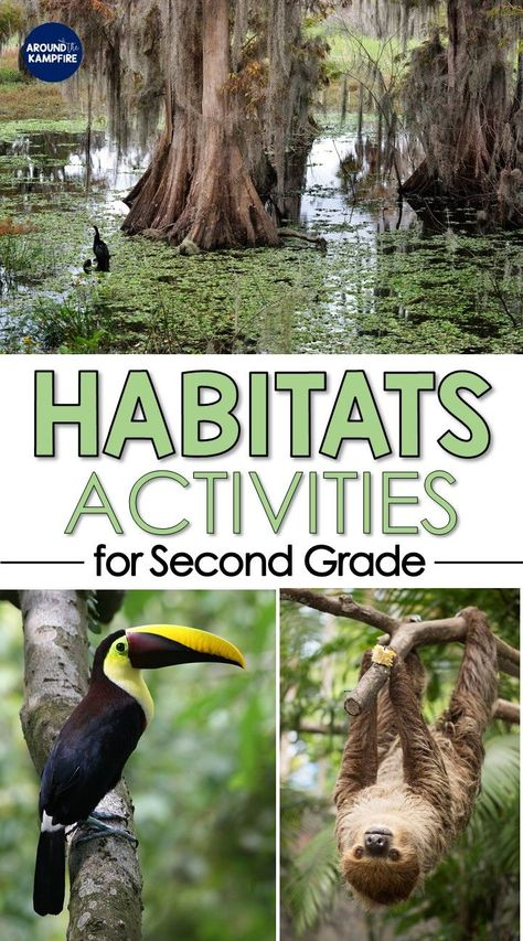 Hands-on habitat activities for grade science. Find fun teaching ideas, video links, lessons, and science experiments for kids for about habitats and ecosystems. Ideal for NGSS interdependent relationships in ecosystems for grade. 2nd Grade Activities, Second Grade Science, Science Activities For Kids, Science Experiments Kids, Science Lessons, Life Science, 2nd Grade Crafts, Teaching Second Grade, Science Books