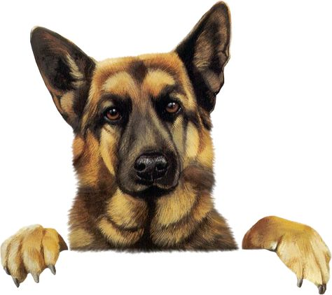 German Shepherd Clipart Actual Site Does Not Exsist Anymore German Shepherd Dogs Shepherd Dog Puppy Images