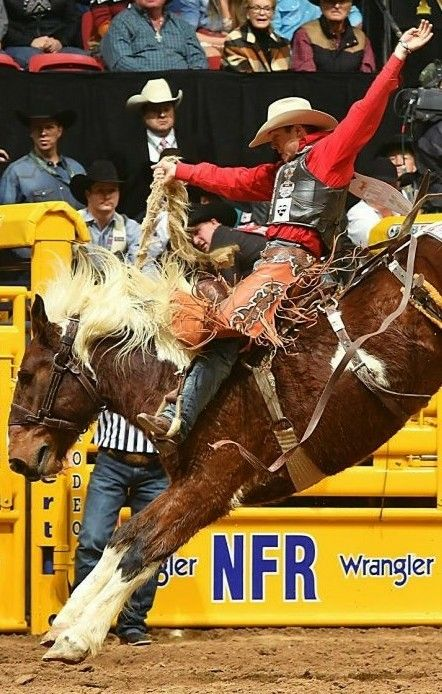 Pin by Stephen CRAIG on Rodeo | Rodeo life, Rodeo events