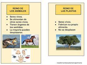 Maestra De Primaria El Reino Animal Y El Reino De Las Plantas Esquemas De Naturales Adapta Reino Animal Estandares De Aprendizaje Vertebrados E Invertebrados