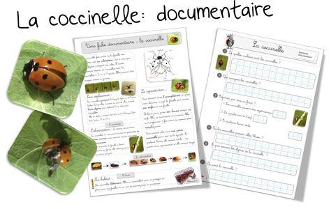 La coccinelle : Fiche documentaire - Bout de gomme