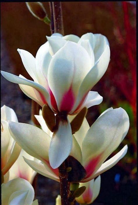 Beautiful Flowers On Twitter Beautiful Flowers Amazing Flowers Pretty Flowers