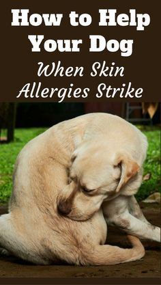 Understanding Dog Skin Allergies And How To Help Your Poor Pooch