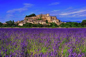Lavender Field Provence Photograph Back In Time By Midori Chan Lavender Fields Provence Provence France Photos