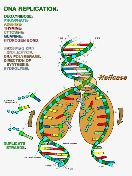 Dna The Double Helix Coloring Worksheet Answers Coloring