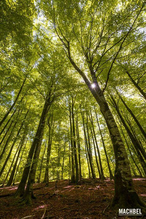 El frondoso bosque de los embalses de Leurtza, Navarra - machbel
