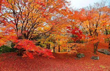 Trees With Fiery Fall Hues Bless My Weeds Japanese Garden Autumn Scenery Fall Foliage