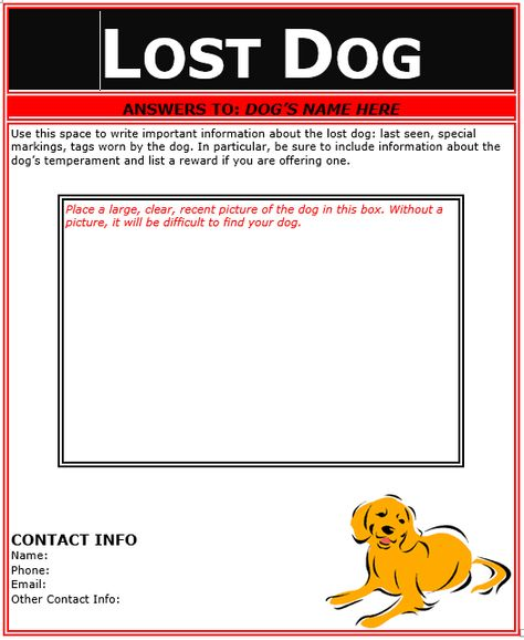 Lost Dog Flyer Template flyer template Pinterest Flyer - lost dog flyer template