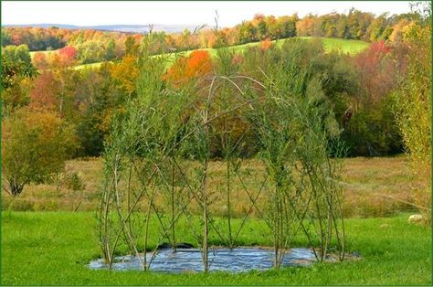 Willow_Dome _