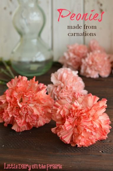 I was never a fan of carnations until I leaned how to make them look like Peonies! Little Dairy on the Prairie