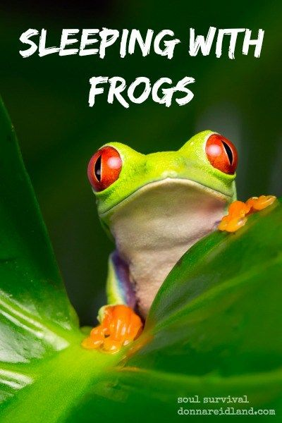 Are You Sleeping With Frogs January 29 Understanding The Bible Christian Blogs Christian Devotions