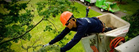 Savatree Certified Arborists Will Help You Avoid Birch Tree