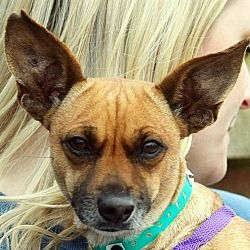 Available Pets At Animal House Shelter Inc In Huntley Illinois Pets Animal House Animals