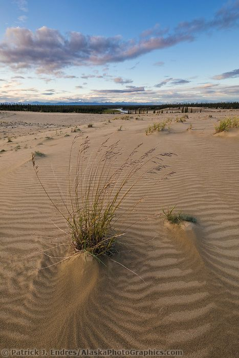 Tufts Of Grass Growing In The Great Sand Dunes In The Kobuk Valley National Park Arctic Ala Kobuk Valley National Park American National Parks National Parks