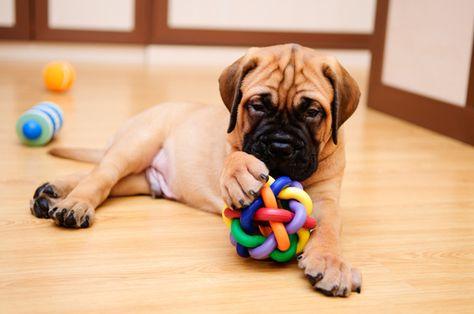 5 Excellent Dog Toys for Mental Stimulation