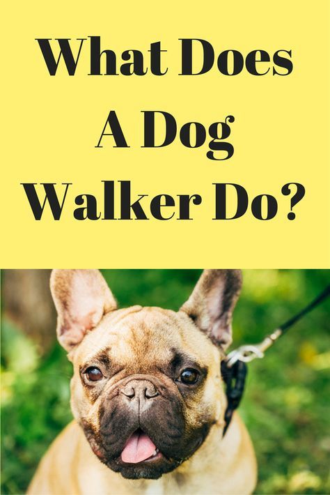 What Does A Dog Walker Do Dog Walker Dog Walker Business Dogs