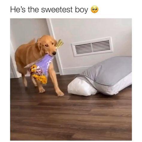 Video by insta: good.boy.nash 🎥