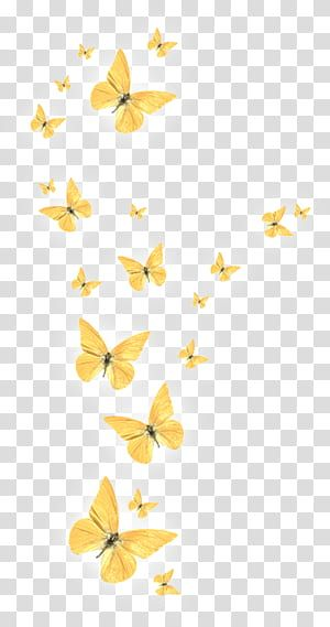 Butterfly Golden Butterfly Yellow Butterfly Transparent Background Png Clipart Yellow Butterfly Butterfly Clip Art Butterfly Background