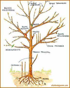 Informe Todo Sobre La Poda De Especies árboles Rosales Arbustos Y Frutales Podas De Floración Y Bonsai Tree Care Large Backyard Landscaping Bonsai Garden