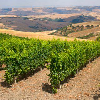 Vin Italien Pouilles Basilicate Et Calabre Des Terroirs