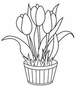 Bunga Tulip Hitam Putih Hasil Image Search Sketsa Bunga Gambar